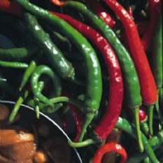 Hot Pepper Cayenne Long Slim Seeds 10 grams - Bulk Discounts available